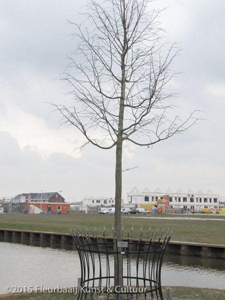 Koningsboom